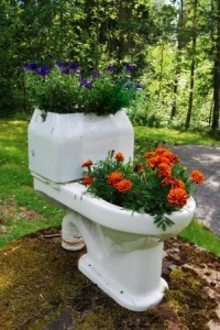 toilet_garden
